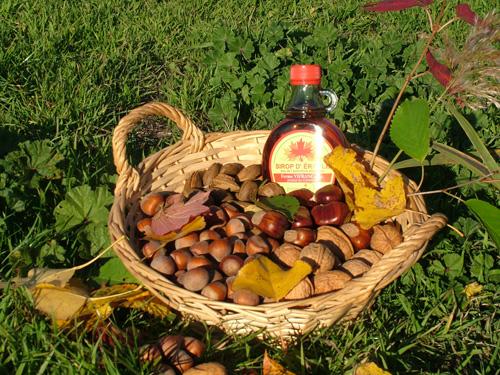 Les fruits a coque