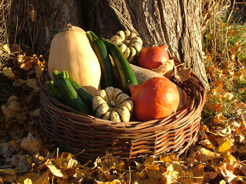 Les legumes 2